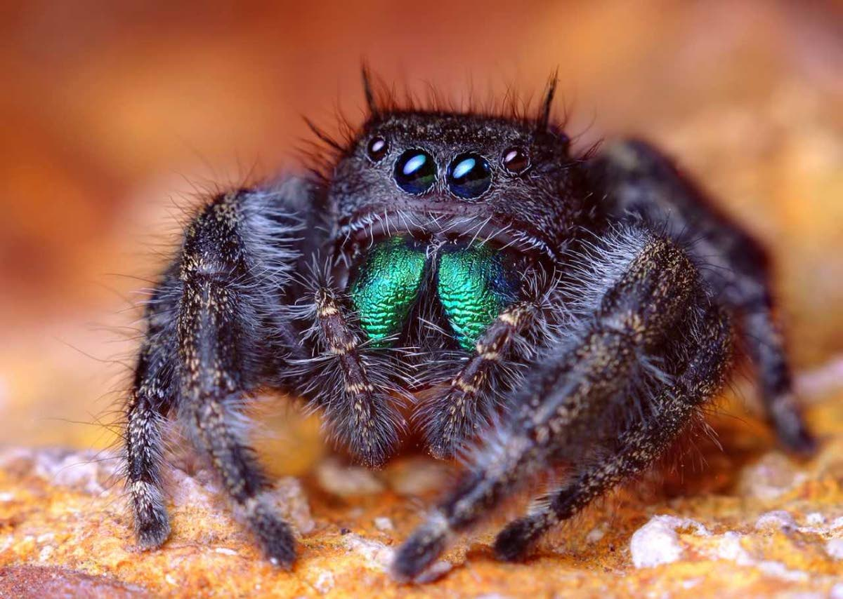 Scariest looking spider - photo#42