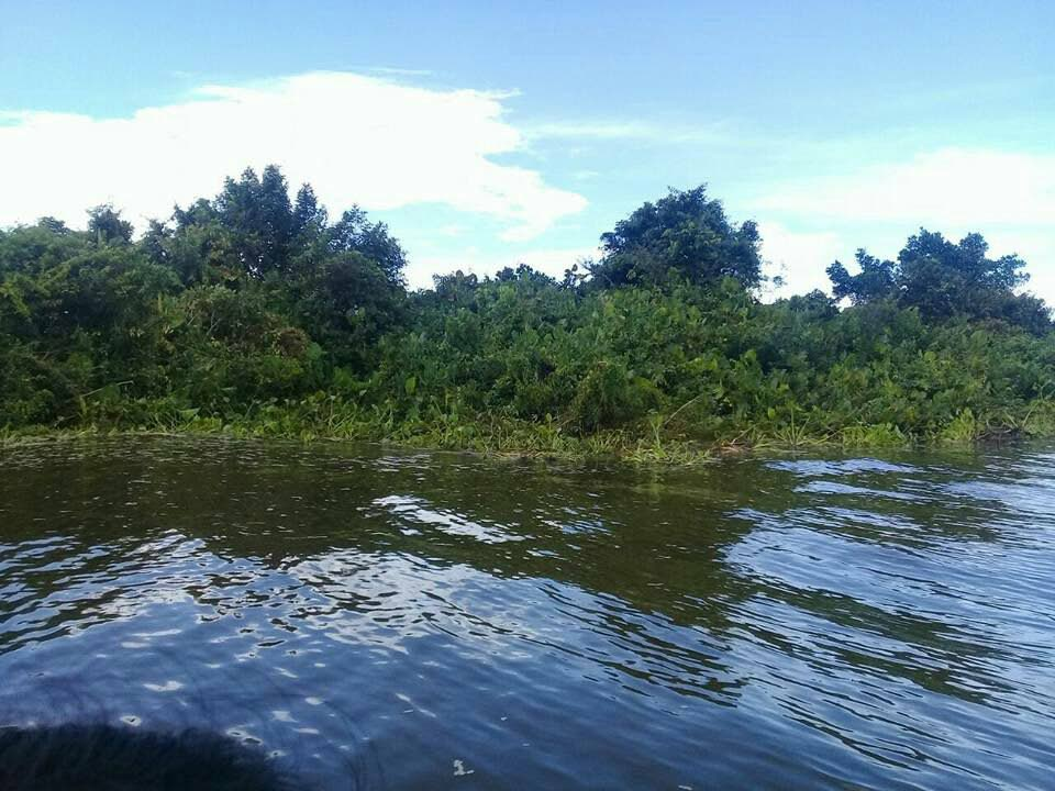 """The EMA says this """"floating island"""" seen off Cedros last week is floating vegetation washed into local waters from the Orinoco River, Venezuela."""