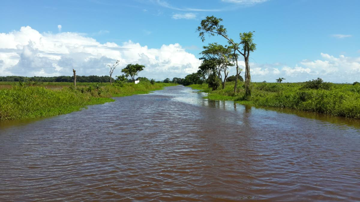 The Nariva Swamp, like many of our natural spaces, provides ecosystem services at no cost.