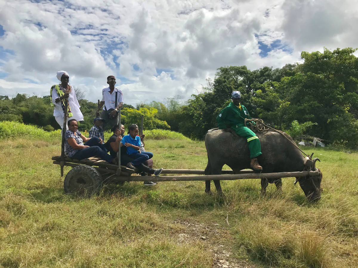 The tour group gets a traditional bull cart ride with 'Papito' the bull and farmer Patrick.