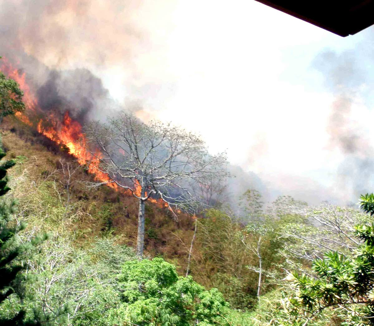 Bush fires, like this one in the Maraval Hills, are a common feature during the Dry Season. FILE PHOTO