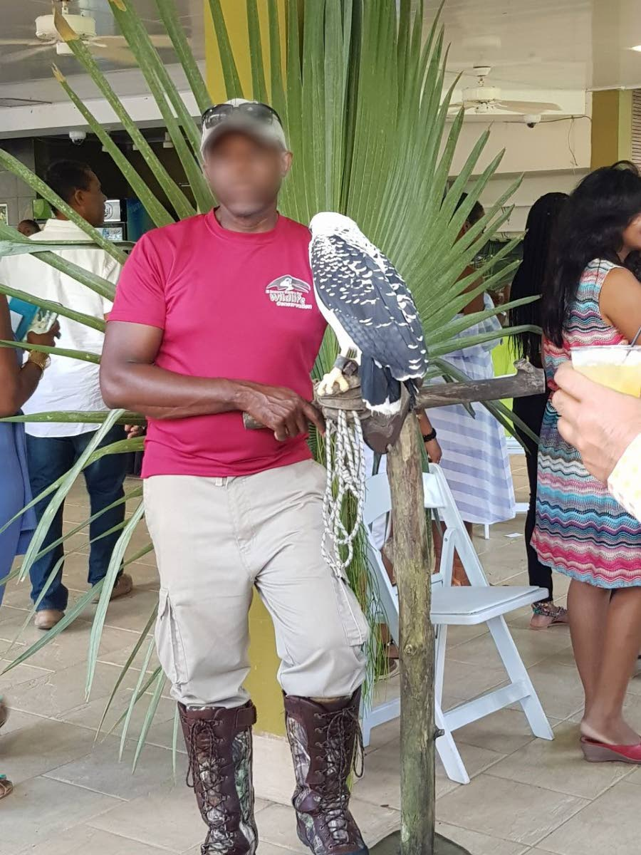 Poor Owl! – One of the birds on show to Moka patrons amid the noise