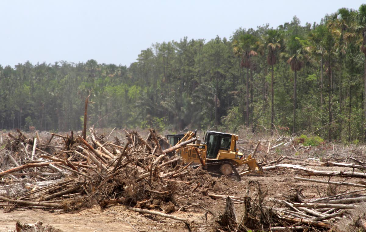 A Kallco Construction Co excavator clears felled trees to make a buffer zone at the start point for the construction of the Cumuto to Manzanilla Highway in Cumuto yesterday. PHOTO BY ROGER JACOB