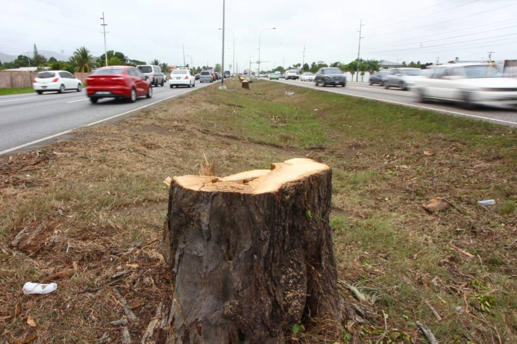 A single stump remains of a line of poui trees chopped down between Valsayn and Curepe along Churchill Roosevelt Highway in preparation for the construction of the Curepe Interchange.PHOTOS BY ROGER JACOB