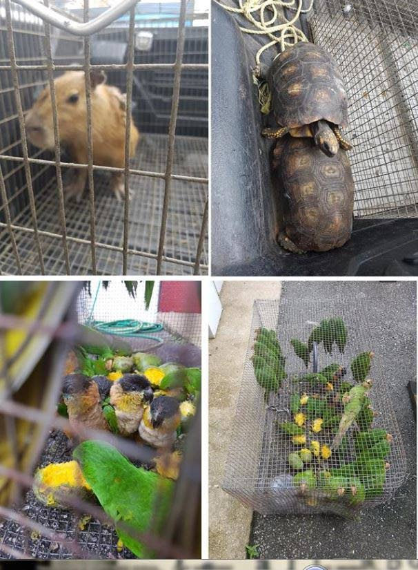 Some of the protected wildlife which was brought to the Princes Town magistrates court yesterday.