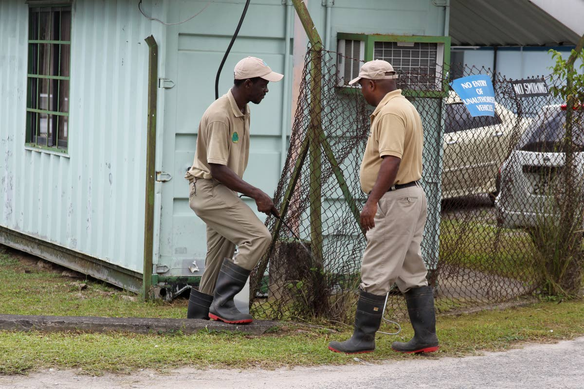 CONTROL: Emperor Valley Zoo workers spray around the Point Fortin hospital yesterday after staff complained about snakes on the compound.