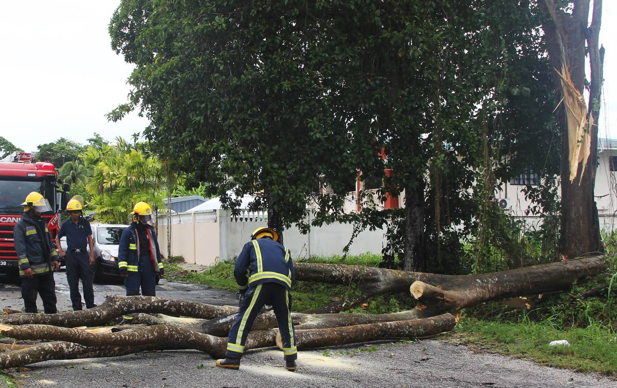 TIMBER!: Firemen cut a tree which fell yesterday during heavy wind which accompanied heavy showers yesterday in Palmiste Park, south Trinidad. PHOTO BY LINCOLN HOLDER