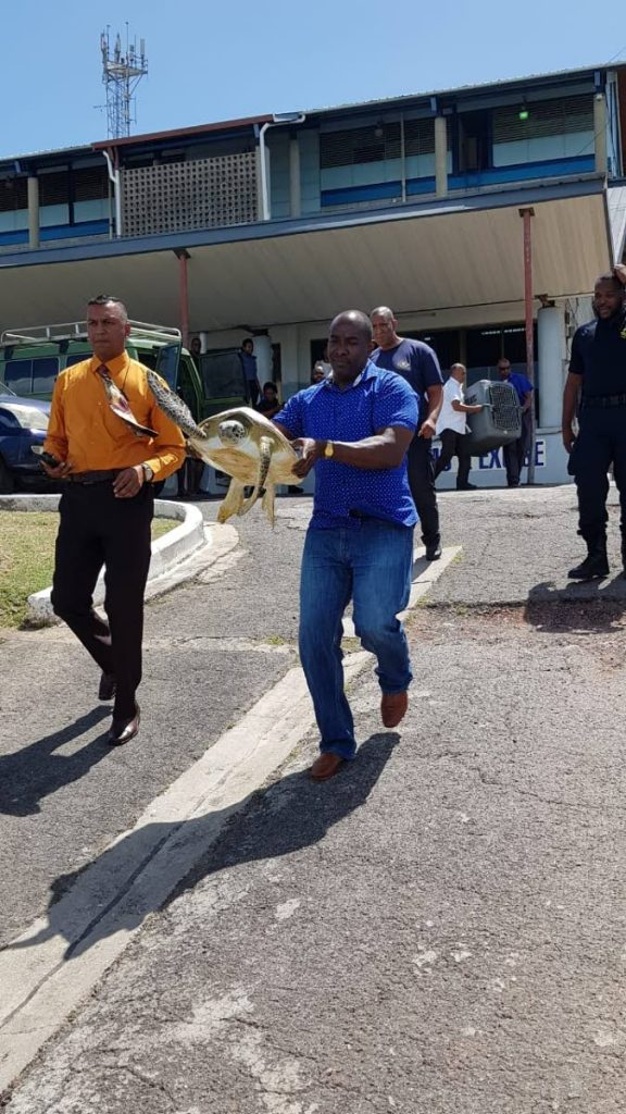 Steve Seepersad and Hayden Simmon of the Forestry Division carry the turtle from the Customs and Excise Division building in Cedros down to the seaside to be freed yesterday. PHOTO BY STACY MOORE
