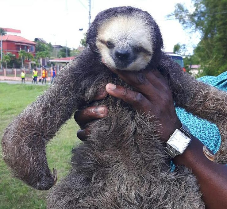 Sloth rescued.