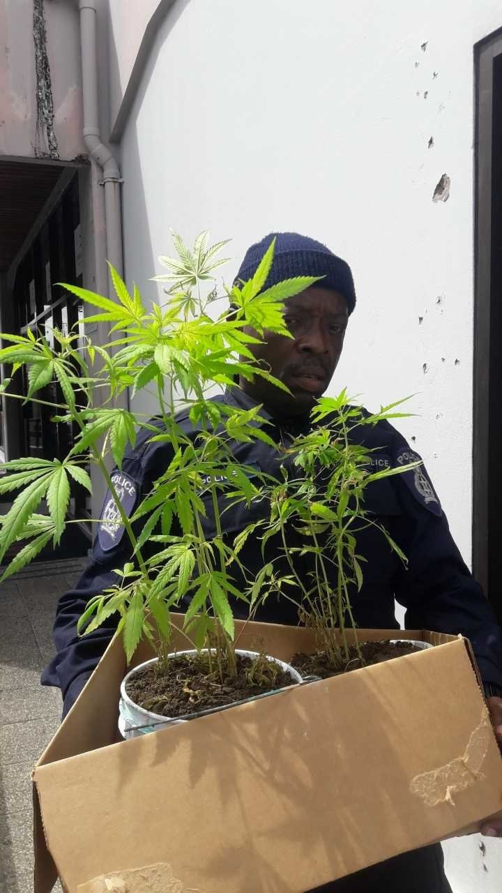 PC Daniel Wilson leaves San Fernando Magistrates court with marijuana plant.