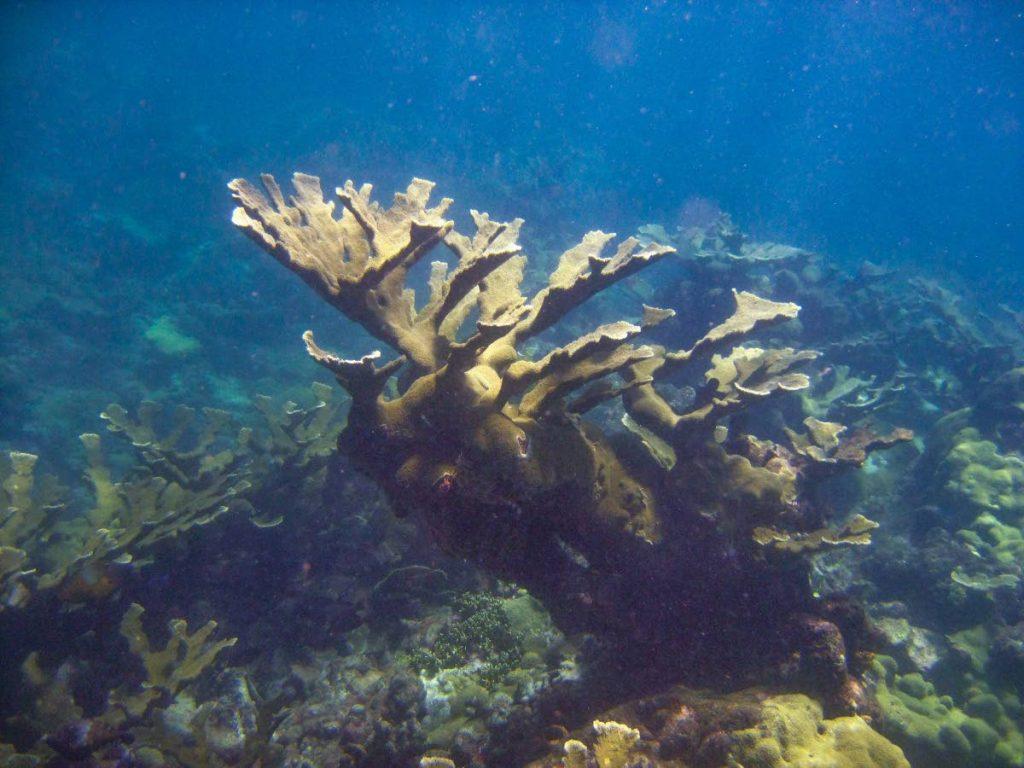 Caribbean coral reefs critically endangered