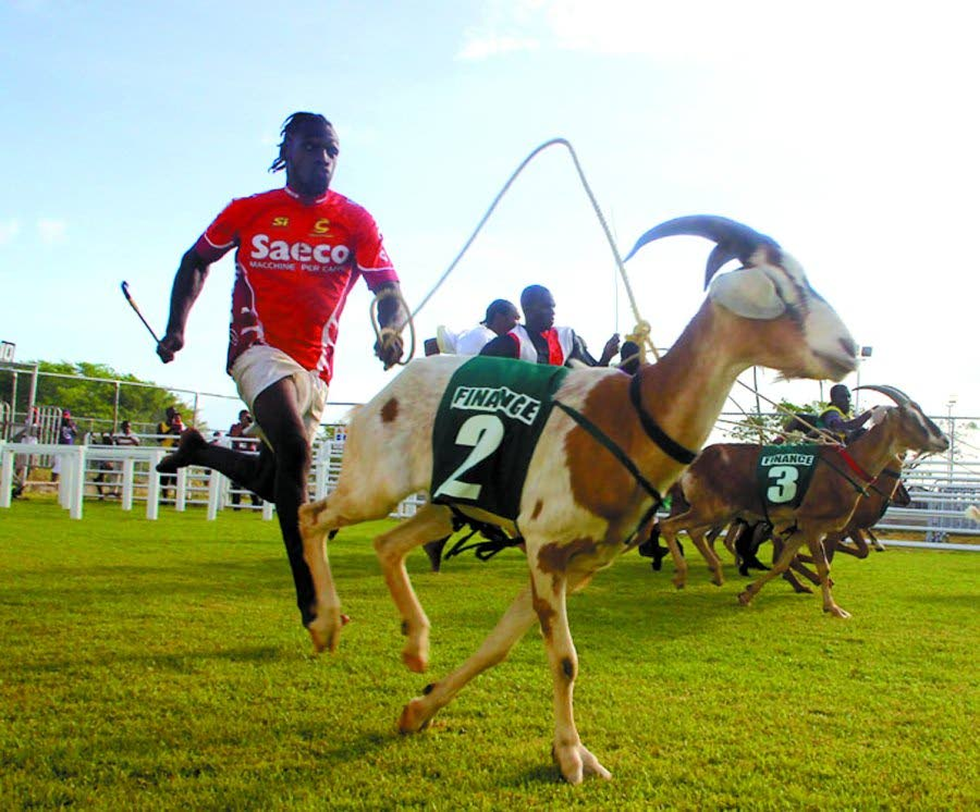 File photo: A jockey sprints after his goat in a previous edition of the annual Easter goat racing competition in Tobago.