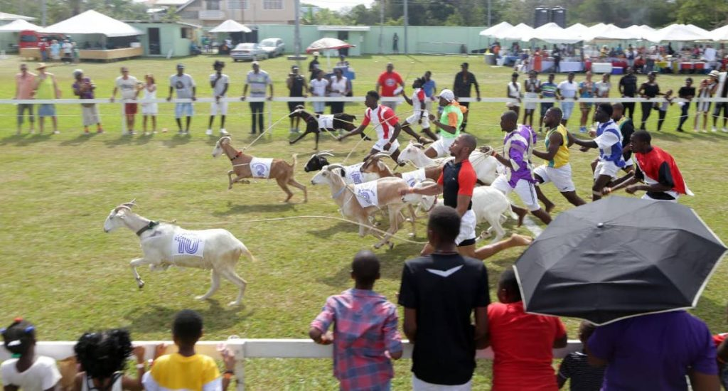 In this file photo, jockeys race with their goats.