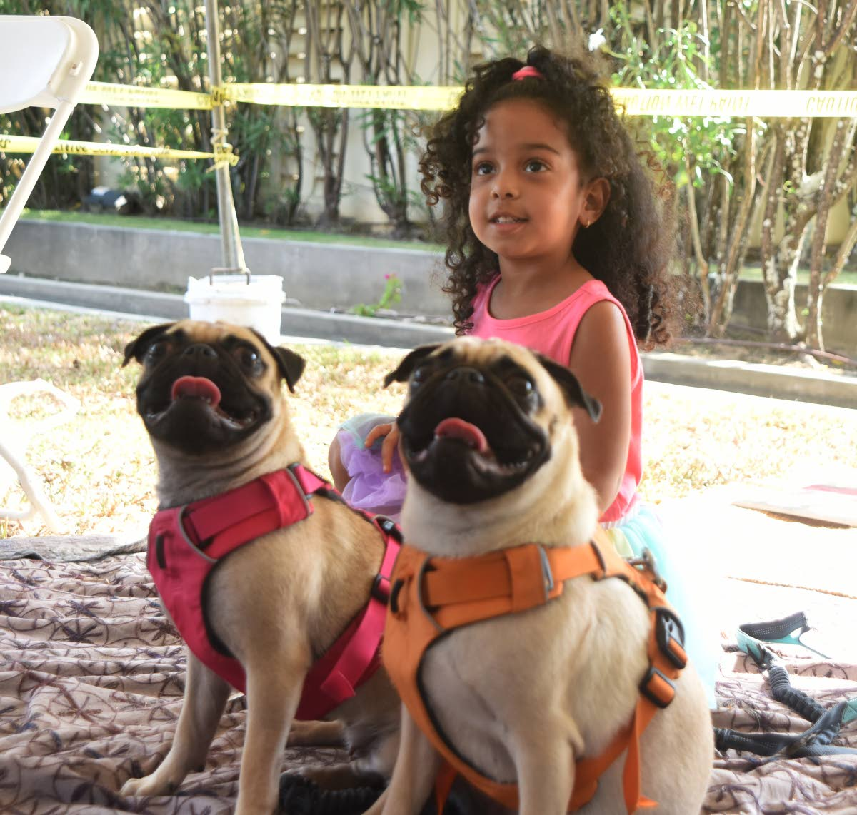 Four-year-old Khloe Lawrence made friends with these French bulldogs, Paris and Milan.   PHOTO BY KERWIN PIERRE