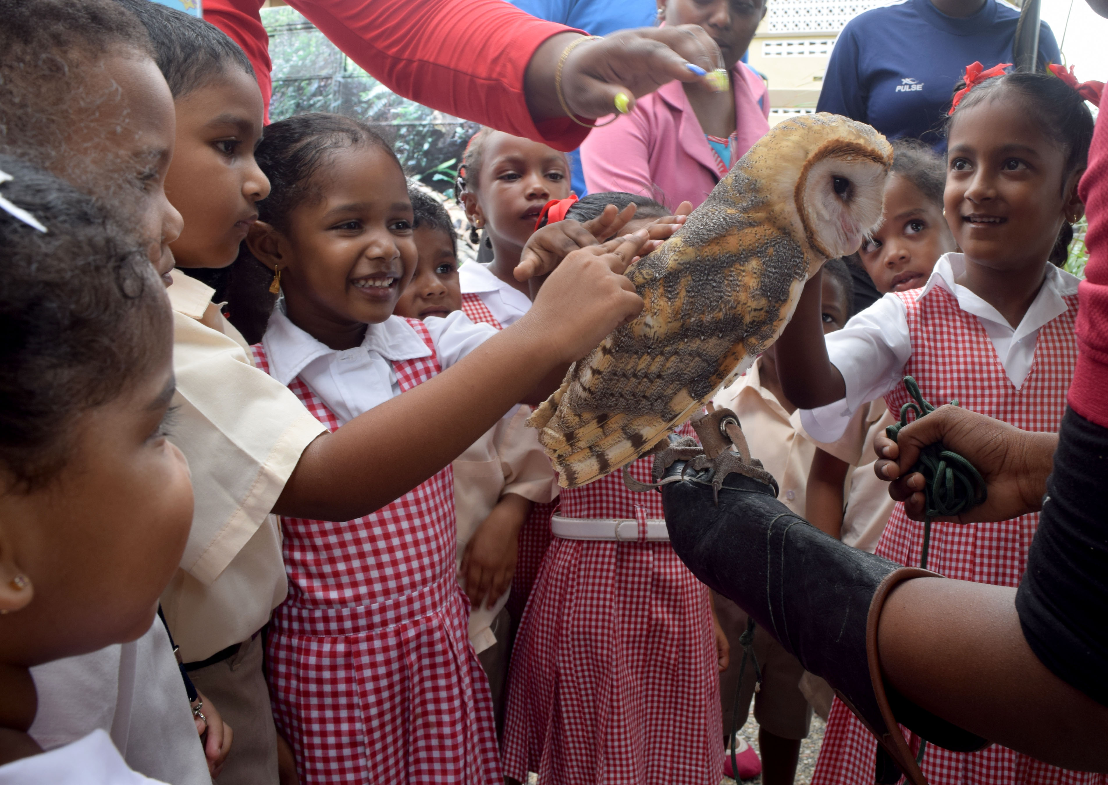 Pre-Schoolers of 'Little Bunnies' Pre-School excitedly pet an owl brought by the El Socorro Centre for Wildlife Conservation at an 'Educational Fun Day' hosted by Councillor for Marabella West La Verne Smith held  for pre-schoolers of the Marabella area on Thursday.  Photos: Vidya Thurab