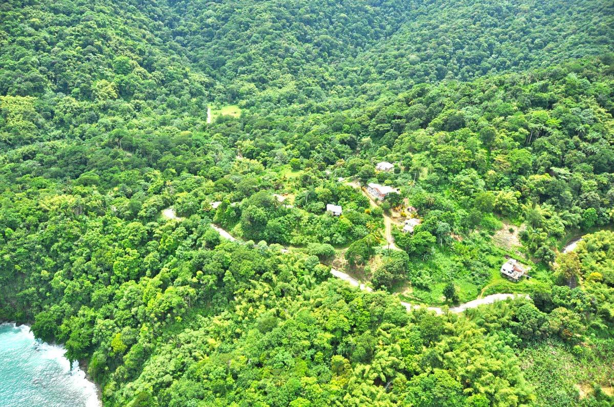 Tobago's Main Ridge Forest Reserve