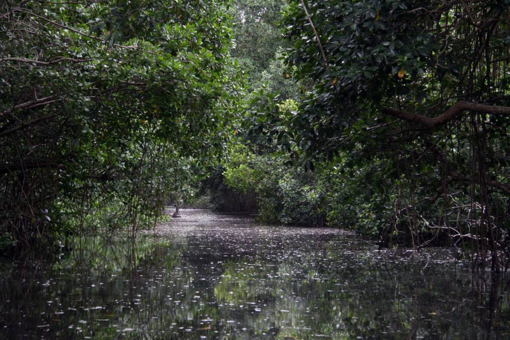 One of the waterways of the Caroni Bird Sanctuary  photographed on August 18, 2017.