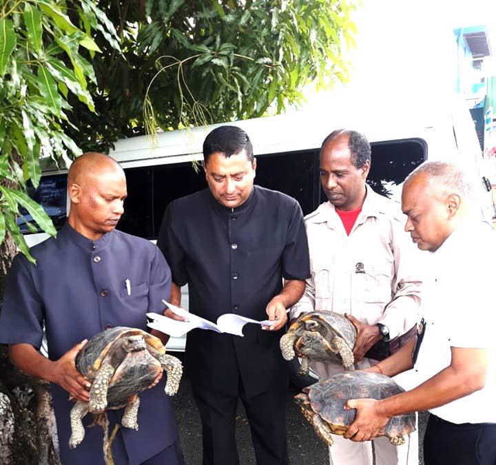 SAVED: Game wardens, from left, Bisham Madhu, Andy Singh, Jeremy Dindial and Michael Ali leaving the Siparia Magistrates' court yesterday with the protected tortoises. PHOTO BY STACY MOORE