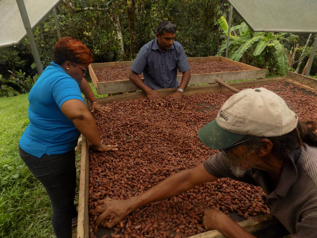 Using large tables called cocoa trays, Carl Fitzjames, bottom right, Nicole Loney-Mills, Unicomer's corporate social responsibility officer, a worker sift through the drying cocoa beans to remove the sticky outer coating.