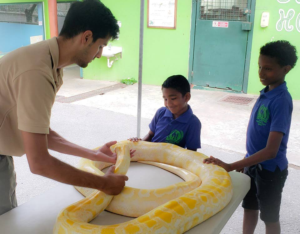 Mustard, the Burmese python, at the Emperor Valley Zoo, being petted recently by two young boys under the supervision of a zookeeper. Mustard was resting at the zoo on Friday while investigations continue into an incident on Thursday when he bit zookeeper Walter Bunyon while being fed.  Bunyon has returned to work. PHOTO COURTESY EMPEROR VALLEY ZOO'S FACEBOOK PAGE