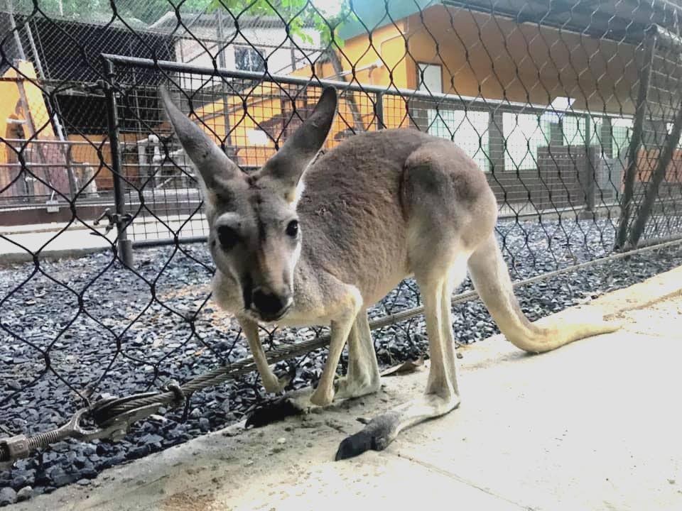 FireOne tells zoo, 'Let's talk' after kangaroo dies