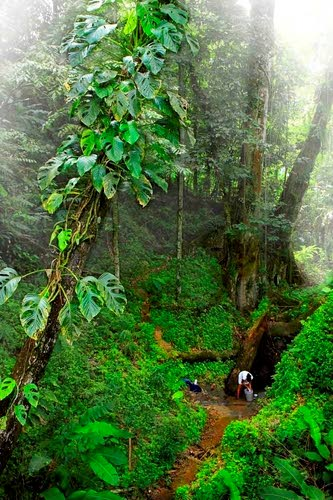 A view of the rain forest stream.