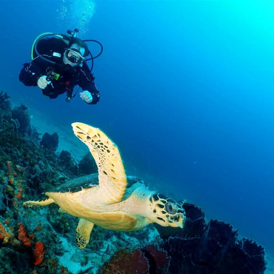 A diver gets a close look at a turtle near a reef. -