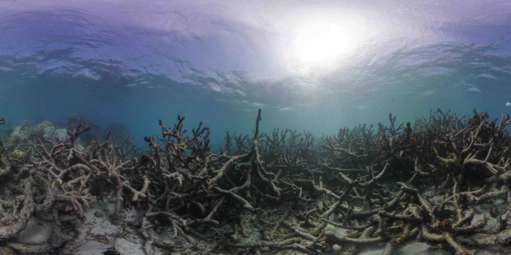 After corals bleach they die and no longer provide homes for marine life. PHOTO BY THE OCEAN AGENCY - THE OCEAN AGENCY