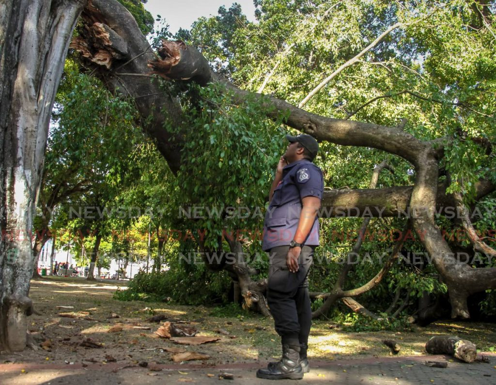 A police officer looks at the tree which fell on on Jairo Jose Fontt Acosta and Yuliannis D. Perez at Woodford Square, Port of Spain, on Monday. - AYANNA KINSALE