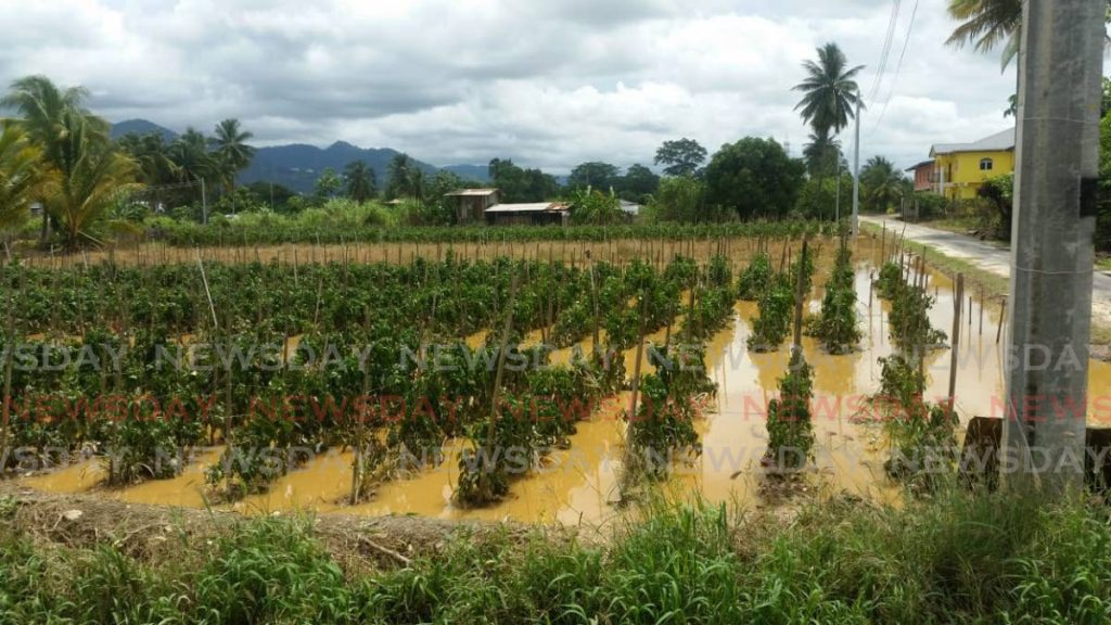 An agricultural holding in Aranguez North on Monday September 23, 2019. PHOTO COURTESY MINISTRY OF AGRICULTURE -