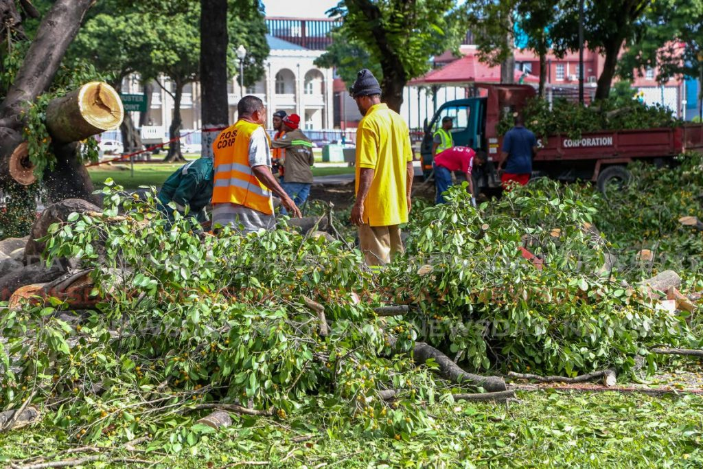 Workers of the Port of Spain City Corporation remove the remains of a  fallen tree in Woodford Square on Wednesday. - Jeff Mayers