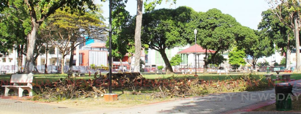 Cut branches from rotten trees at Woodford Square in Port of Spain. The square is expected to reopen to the public some time this week.  - ROGER JACOB