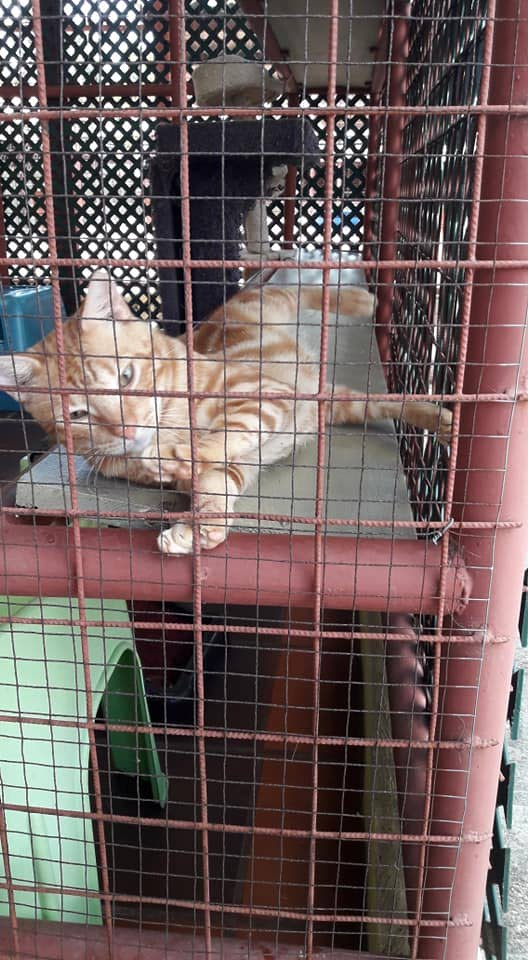A cat at the TTSPCA's shelter.  - TTSPCA'S FACEBOOK PAGE