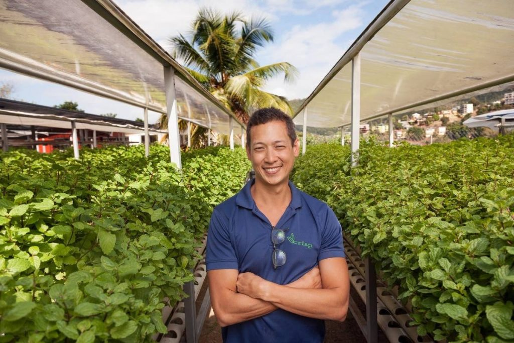 Christian YoungSing's focus is on plants: basil; mint; baby lettuce; baby arugula; micro-greens mix; and nine varieties of individual micro-greens for the restaurant market.   - Mark Lyndersay