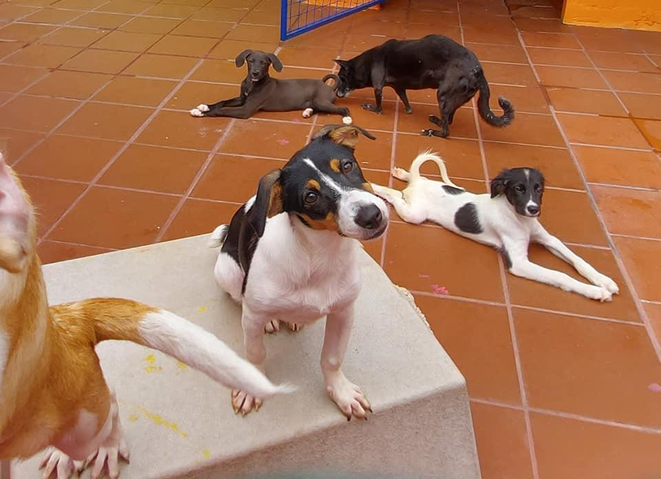 Dogs at the TTSPCA Port of Spain shelter.  - Photo via TTSPCA Facebook page