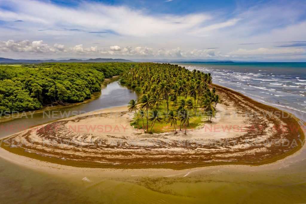An aerial shot taken last Wednesday of the meeting place between the Nariva River, left, and the Atlantic Ocean in Manzanilla. The beach is covered in sargassum seaweed.  - Jeff Mayers