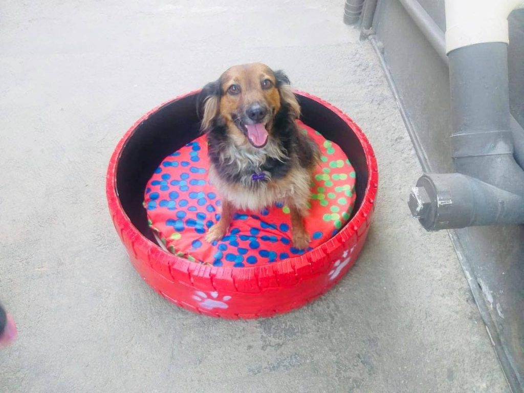 A happy customer sits in their dog bed.  -