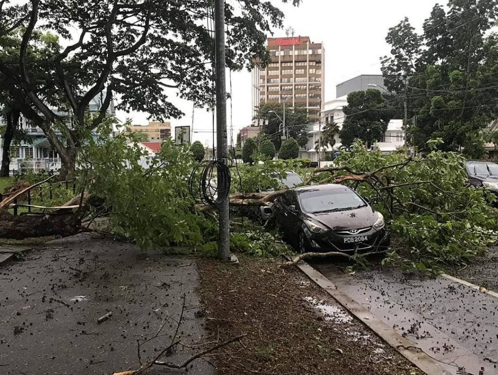 A fallen tree damaged cars on Queen's Park West, opposite Queen's Royal College. Photo by Rachel Lee Young
