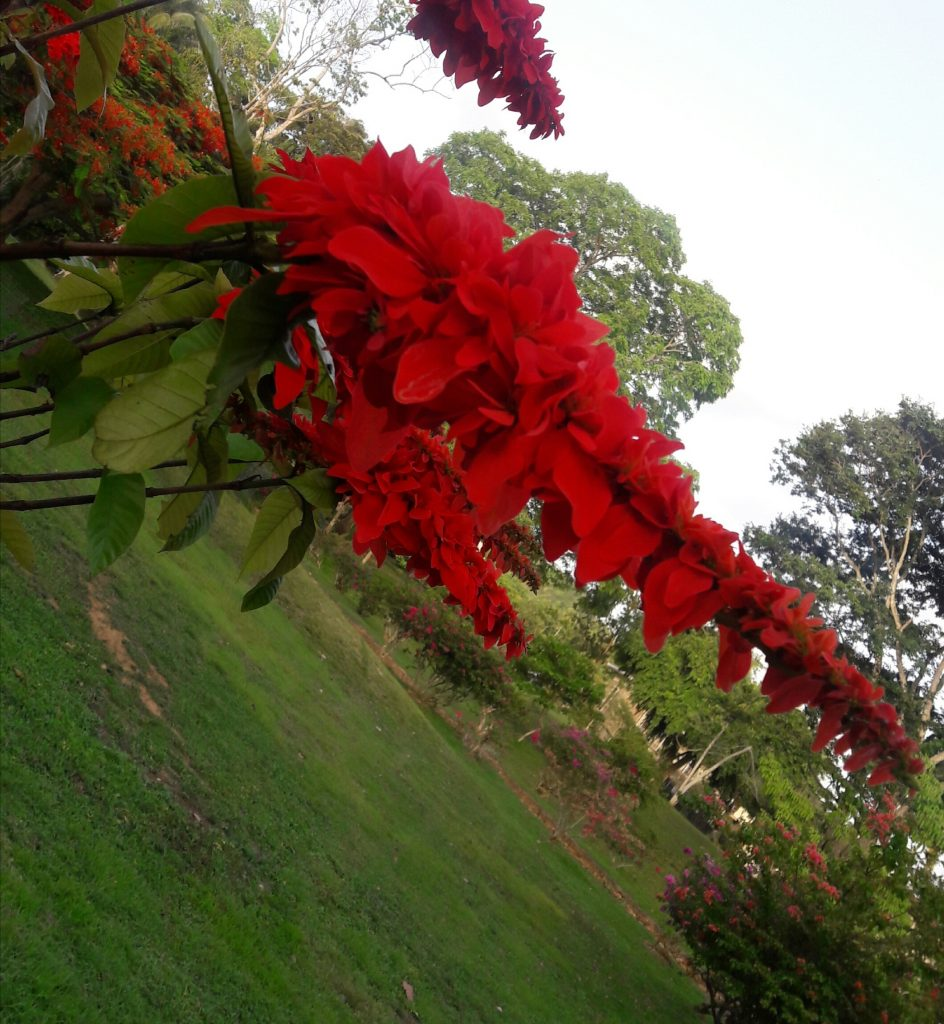 Photo taken by 8 year old Tasneem Ali at the botanical gardens.