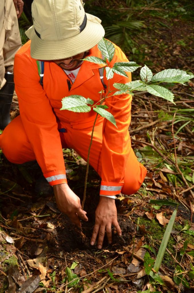 NGC employee  planting a tree during the company's  reforestation exercise.   -