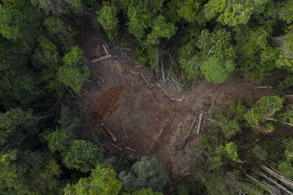 Forests are being destroyed everyday by illegal loggers as seen in the Amazon rainforest in Prainha, Para state, Brazil. (AP Photo) -