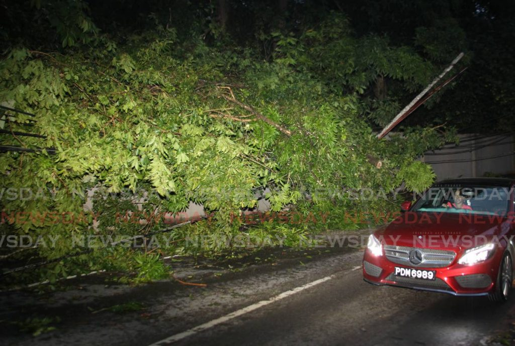 Fallen branches caused blackouts and a traffic pile-up on Saddle Road in Maraval on Wednesday. - ROGER JACOB