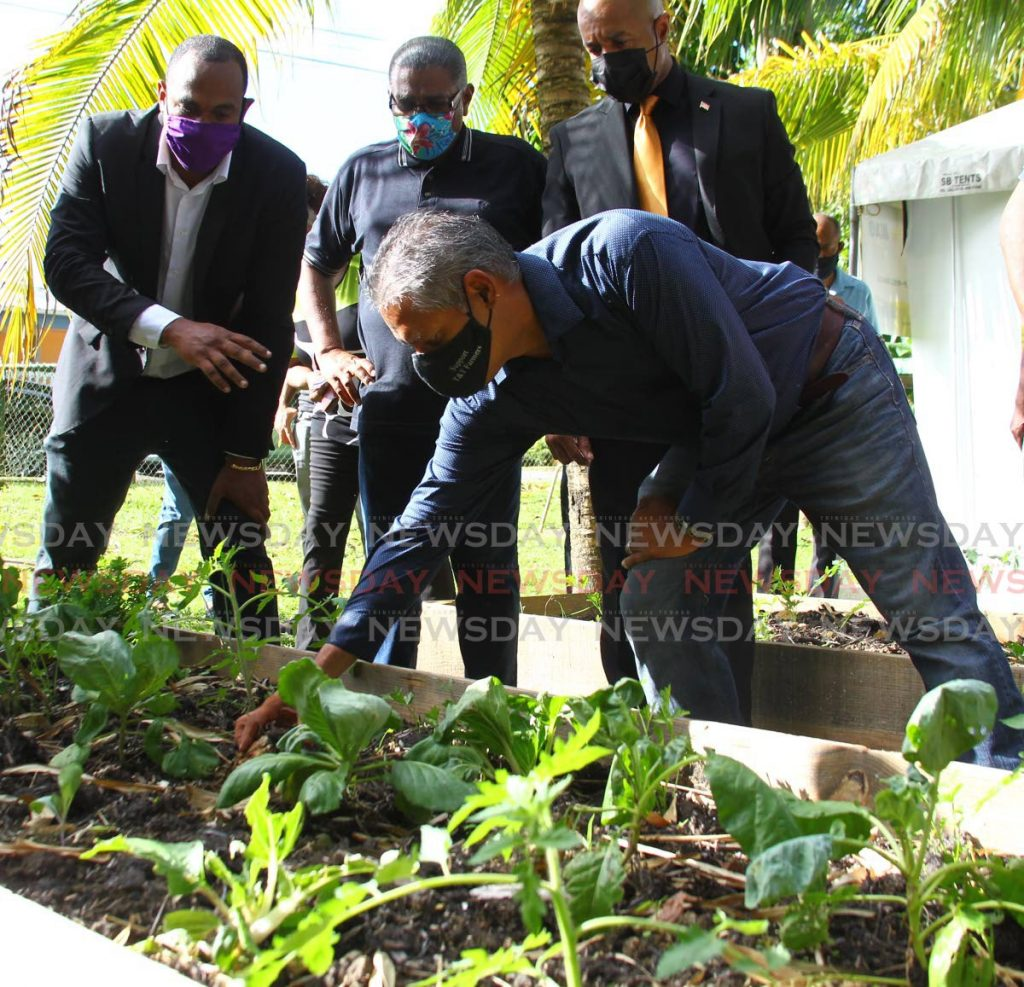 Agriculture Minister Clarence Rambharat inspects crops in one of the grow boxes. Looking on are Arima Mayor Cagney Casimire, local economic development officer Ronald Chan and Francis Weeks who represented the MP for Arima. - ROGER JACOB