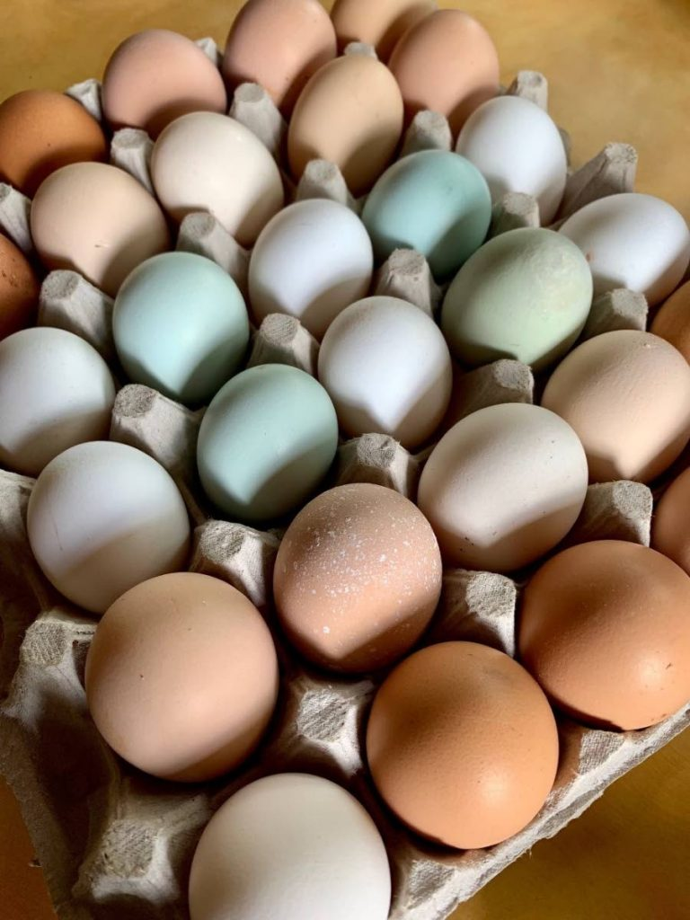 Egg producers on Tuesday warned they could not afford increases in feed prices. -