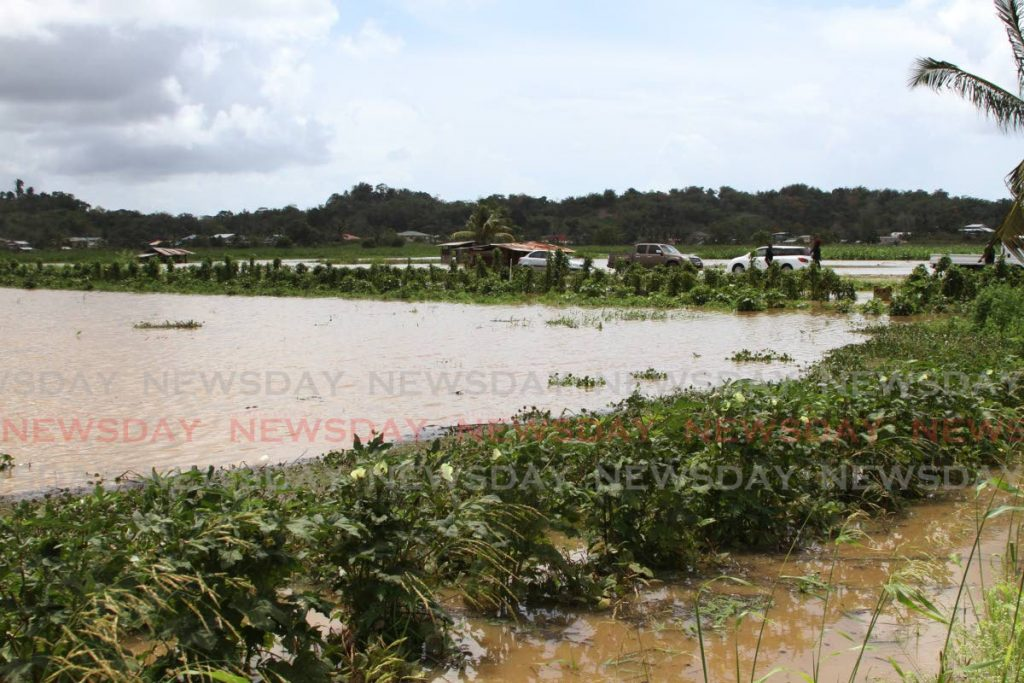 The farming fields of Poodai Lagoon, Penal under floodwaters after unseasonal heavy rains on March 15. Photo by Marvin Hamilton  -