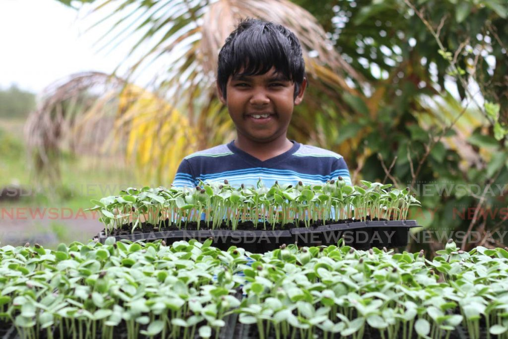 Kyle Rampart, 12, with watermelon seedlings for planting at his family farm in Kernahan Village, Manzanilla on March 11, 2021. Agriculture Minister Clarence Rambharat says family farming plays a central role in Trinidad and Tobago's economic development. - Photo by Marvin Hamilton