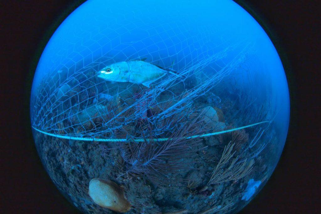 Fish caught in a net. PHOTO COURTESY XL CATLIN SEAVIEW SURVEY. -