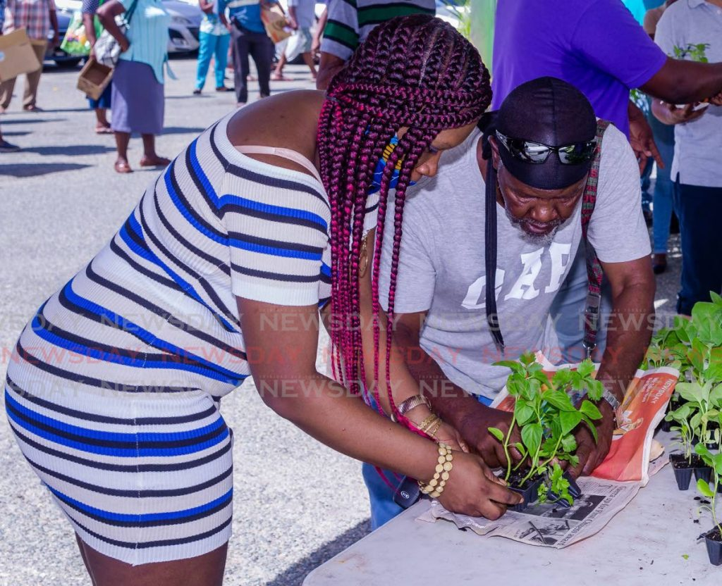Members of the public collect seedlings at a Division of Food Production initiative at Garden Side, Scarborough. FILE PHOTO -