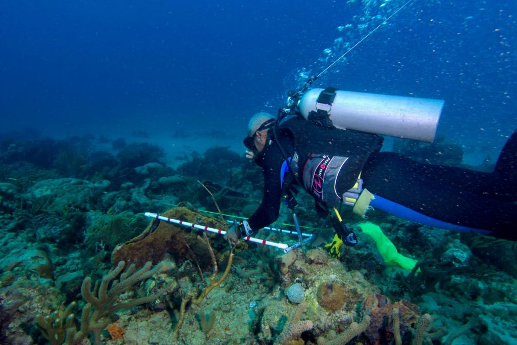 A diver analyses a coral reef.  - Jonathan Gomez
