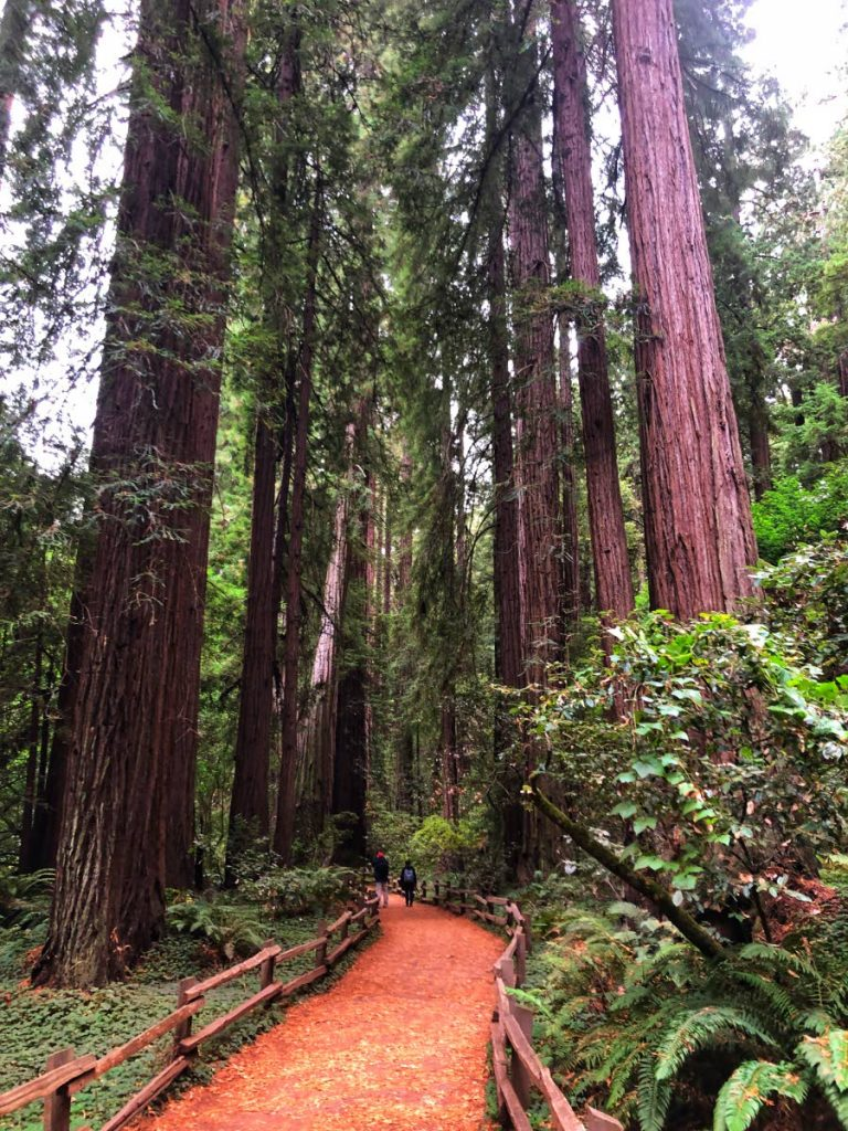 The redwood trees of Muir Woods National Monument in California are nearly 1,000 years old. These ecosystems need active protection and care by us.  - ANJANI GANASE
